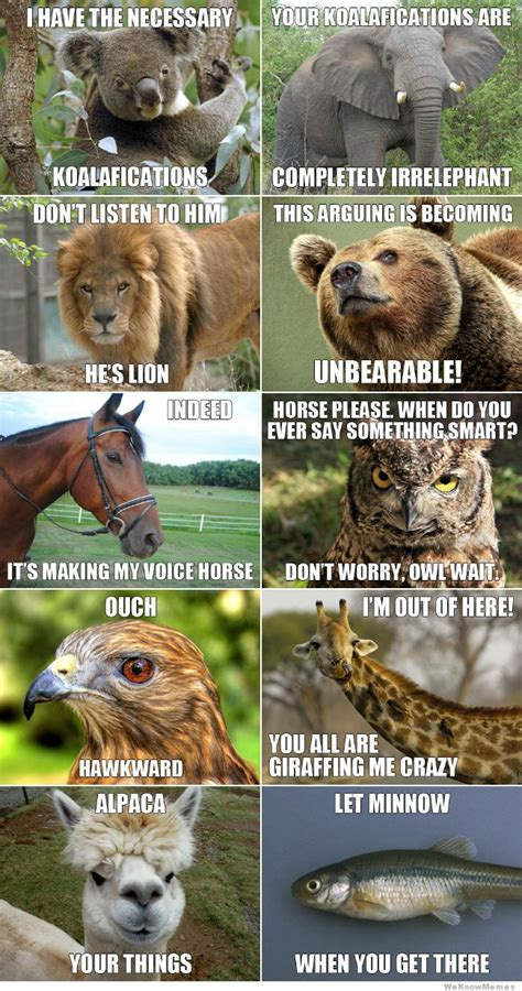 Meme Pun - funny animal meme jokes