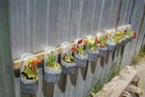 Do Jugs Shed by Planting In Plastic Milk Bottles Recycle Reuse