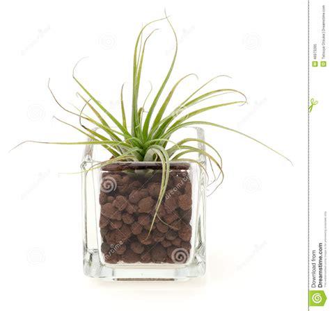 piante in vasi di vetro piante vaso di vetro idee per il design della casa