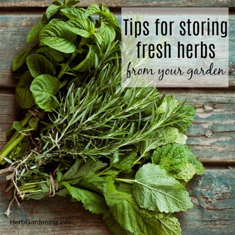 herb garden basics tips for storing fresh herbs from your garden herb gardening info