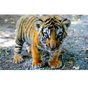 Beb&233s De Animales Salvajes Peligrosos