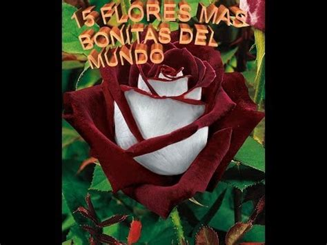 imagenes hermosas sorprendentes las flores mas hermosas del mundo vidoemo emotional
