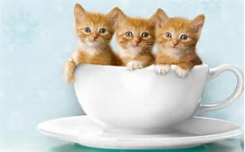 Baby Cat Cute Kittens in Cups