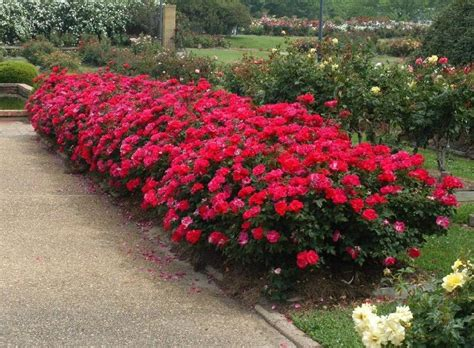 keller landscape guide top landscape plant choice in