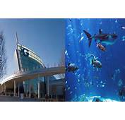 Bill Gates Living Room Aquarium The Aquariums Most Famous