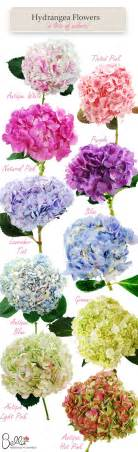 what do the colors of flowers hydrangea colors for your wedding