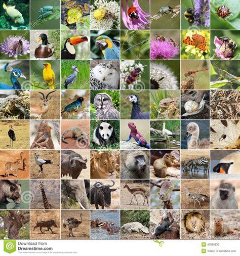 collage der wild lebenden tiere stockfoto bild 47869930