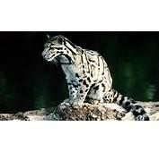 Bing Animal Wallpaper Car Pictures