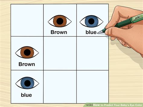 punnett square for eye color how to predict your baby s eye color 12 steps with pictures