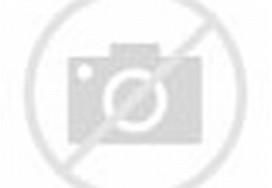 yang ini anjing dan kucing lagi maen kayanya. si kucing lagi berusaha ...
