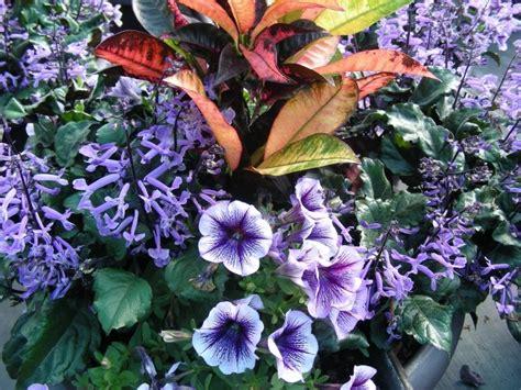 heat l for hummingbirds 1000 ideas about petunia plant on petunias