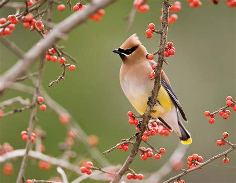 birds in your backyard 100 kinds of birds in your backyard best 25 species