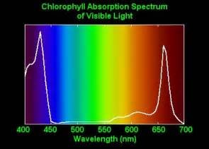 The Major Light Absorbing Pigment In Green Plant Photosynthesis Is by Diy Building Own Led 5 Band Grow Light Artificial