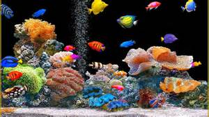 Download image Animated Moving Fish Aquarium PC, Android, iPhone and