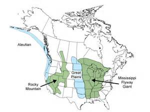 canada geese migration map canada geese flyways us