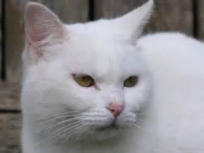 Car 225 cter de los gatos seg 250 n el color del pelo
