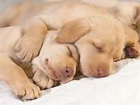 Puppies Cute In Hug