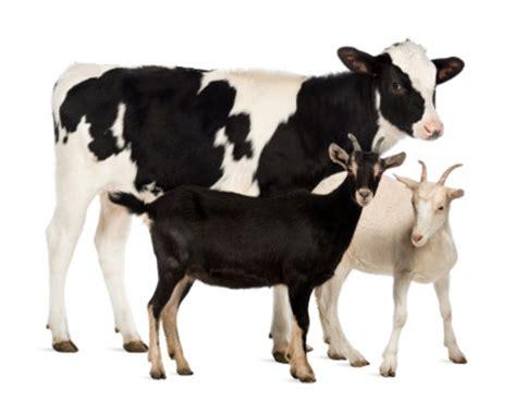 daging kambing dan sapi mana yang lebih bernutrisi
