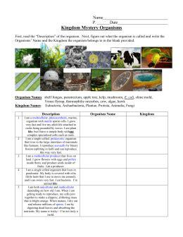 Kingdom Classification Worksheet by Kingdom Classification Worksheet
