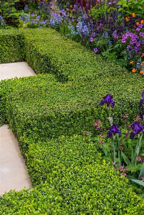 plants for formal gardens garden design formal garden plants rhs gardening