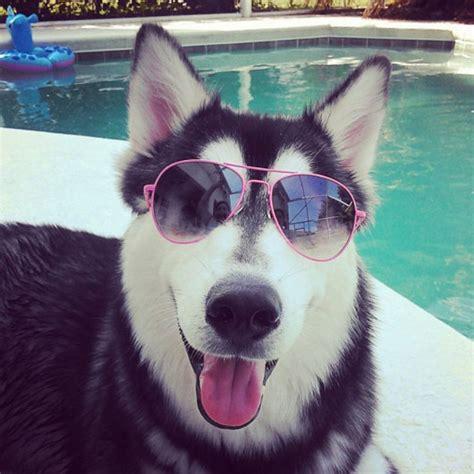 cool dogs 10 dogs we wuv missmalini