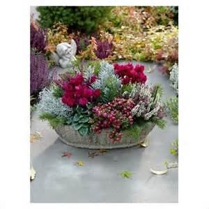 Christmas Flower Plant - autumn container cyclamen calluna pernettya
