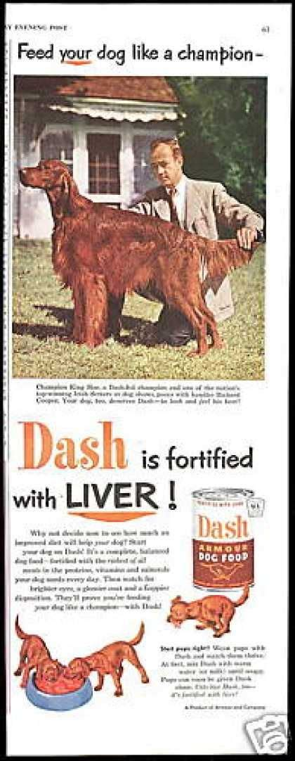 irish setter dog food 523 best images about red dogs on pinterest