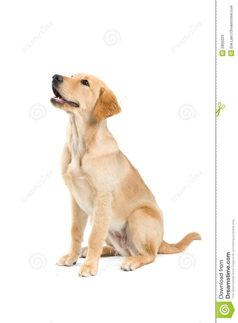 puppy sitter sitting stock photos image 2866023