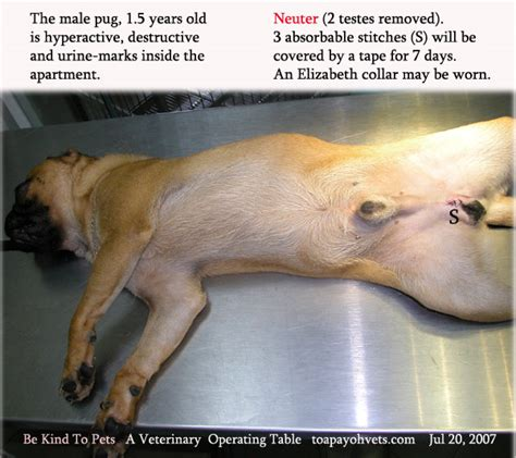 neutered dog marking in house 031208asingapore toa payoh veterinary dog cat rabbits hamster veterinarian veterinary