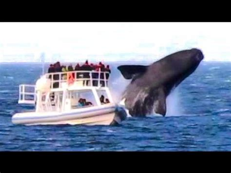 huge boat huge whale jumps very close to boat youtube