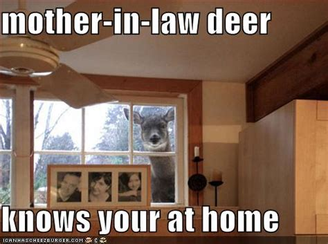 Mother In Law Meme - hilarious captioned pictures boards ie