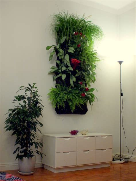 living wall vertical garden green wall bought woolly