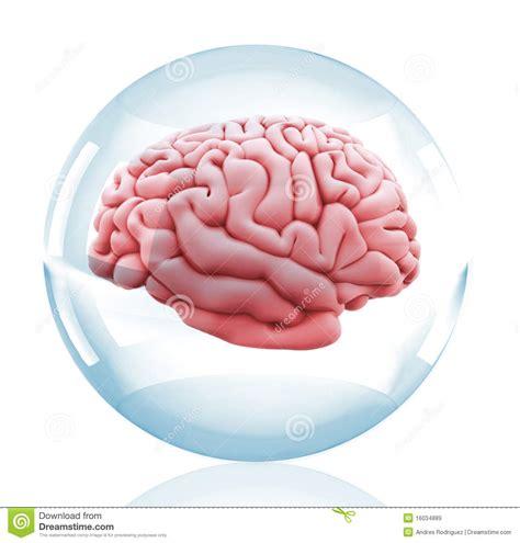 imagenes libres cerebro cerebro 3d en una bola cristalina im 225 genes de archivo