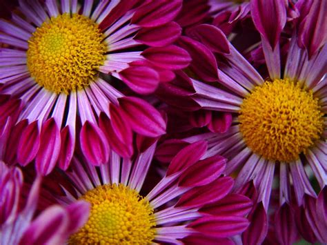 flower pic flower wallpaper flowers wallpaper 249408 fanpop