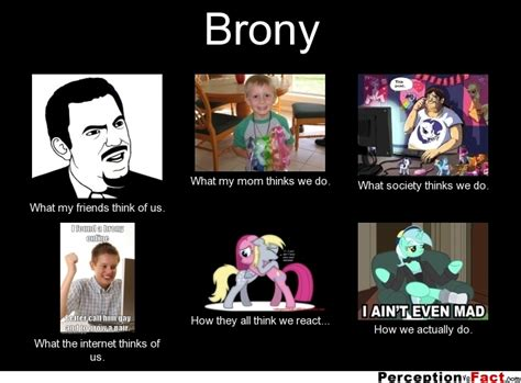 Brony Meme - what i do meme brony memes