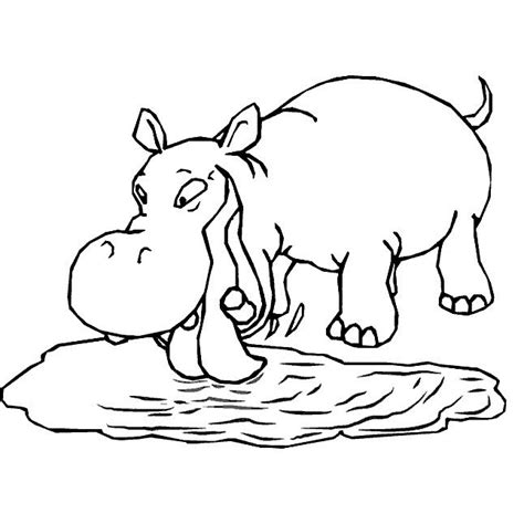 free coloring pages hippo cute hippo coloring pages