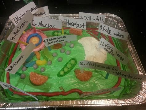 3d project 3d plant cell project projects plant cell project plant cell and projects