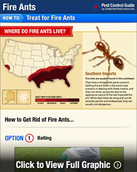 how to get rid of fire ants in the house how to get rid of fire ants in my backyard howsto co