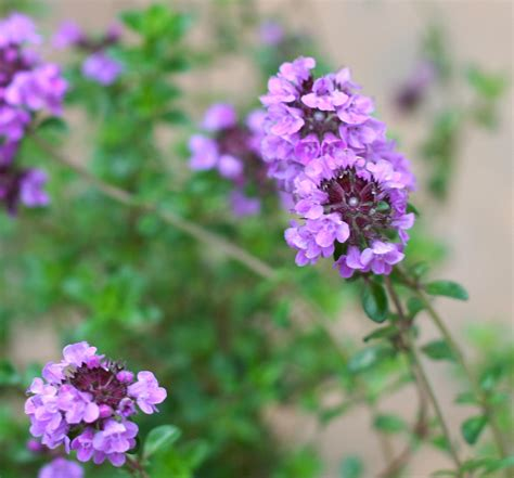 10 plants to ward off pesky mosquitos things to do in ri ri events