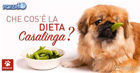alimentazione casalinga per cani alimentazione per cani la dieta casalinga cosa 232