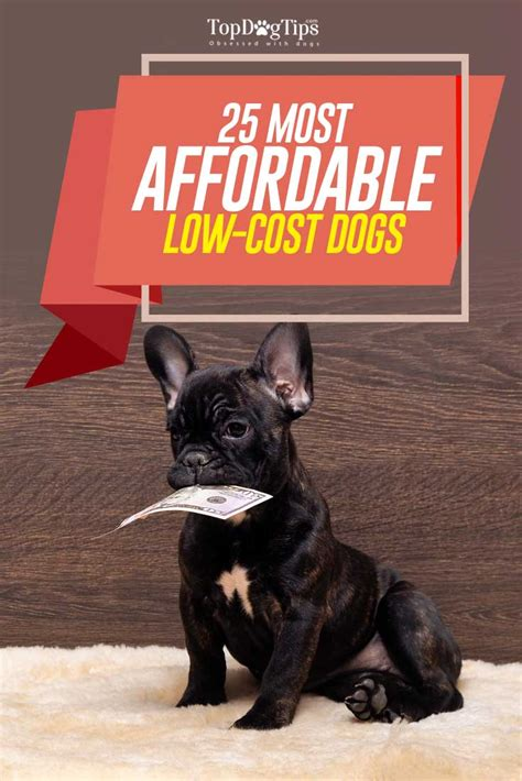 low cost puppy 25 most affordable low cost breeds that anyone can adopt