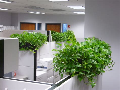 Kitchen Islands Atlanta by Pothos Plant Care Bob S Market And Greenhouses