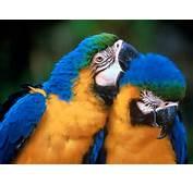 Fotos De Aves Exoticas  E Im&225genes En FOTOBLOG X