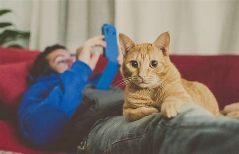 how to comfort a cat the comfort of cats heartwarming photos by marga corameta