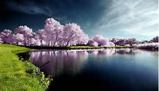 Beautiful Spring Desktop Wallpaper Nature