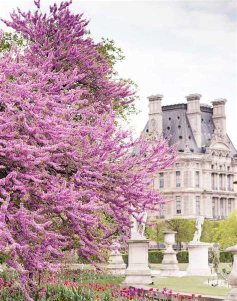 paris in bloom paris in bloom a book by floral photographer georgianna lane shabbyfufu com