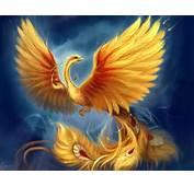 Phoenix  Mythical Creatures Photo 28604904 Fanpop