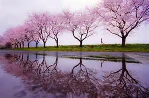 Spring rain wallpaper forwallpaper com