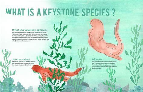 otterology a keystone species on behance