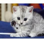 Cute Kitten Saying Hello